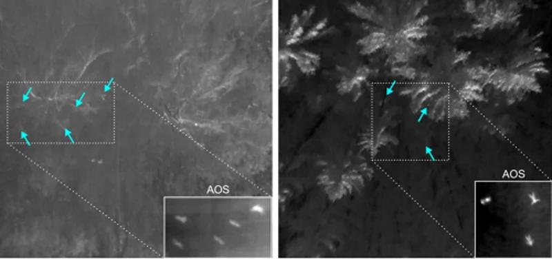 Naukowcy opracowali technologię poszukiwania ludzi z użyciem kamer termowizyjnych na dronach pomiędzy drzewami 2